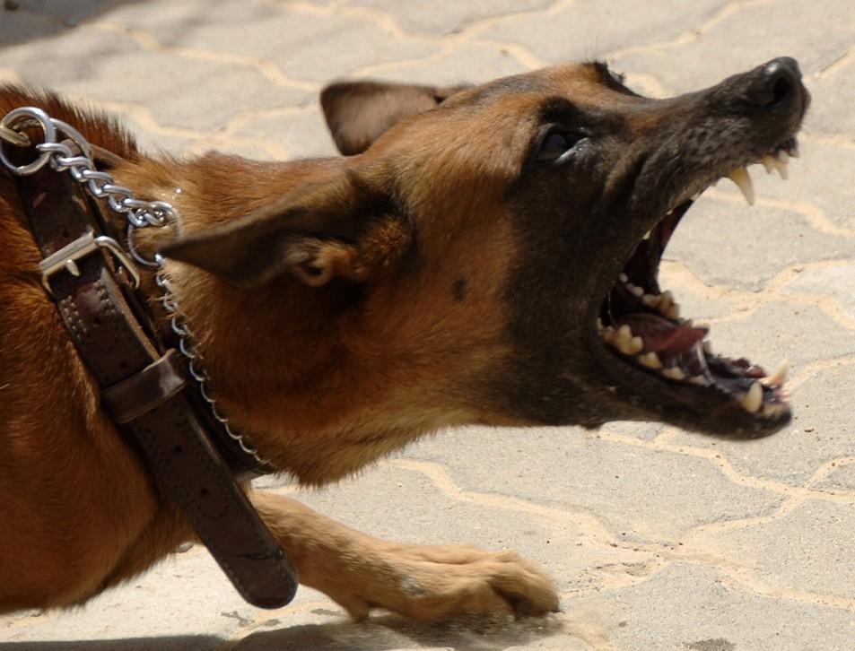 """Curtea de Apel București respinge solicitarea de suspendare a """"Hotărârii de exterminare a câinilor la nivel județean"""", formulată de 55 de ONG-uri de protecție a animalelor"""